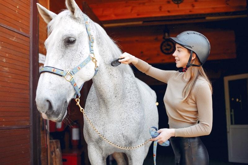 mutuelle pour cheval