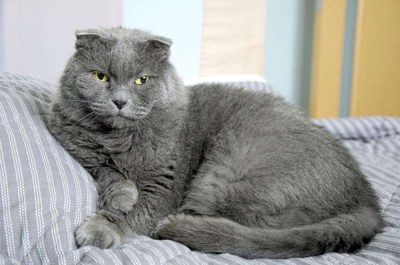 Animal de Compagnie : Combien de temps vit un chat ?
